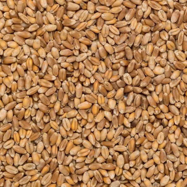 Wheat org. 25 kg