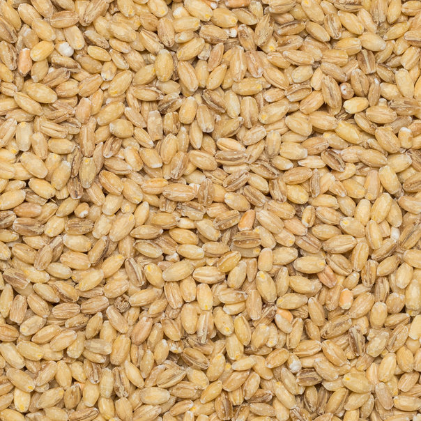 Barley hulled org. 25 kg