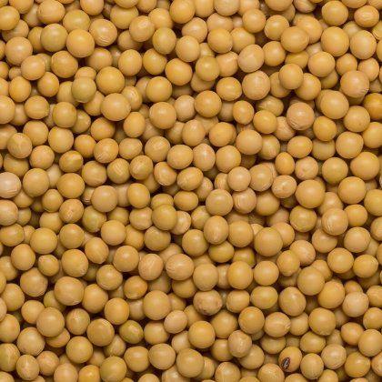 Soya beans natto org. 25 kg FT IBD