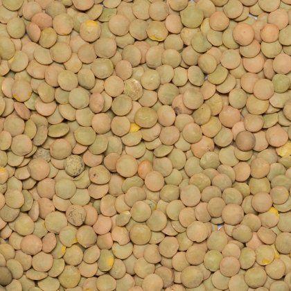 Lentils green Laird org. 1000 kg*