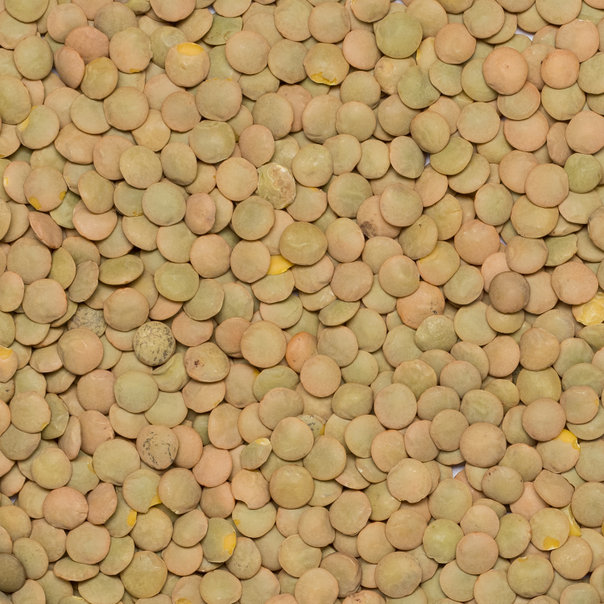 Lentils green laird org. 5 kg