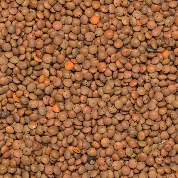 Lentils brown org. 25 kg