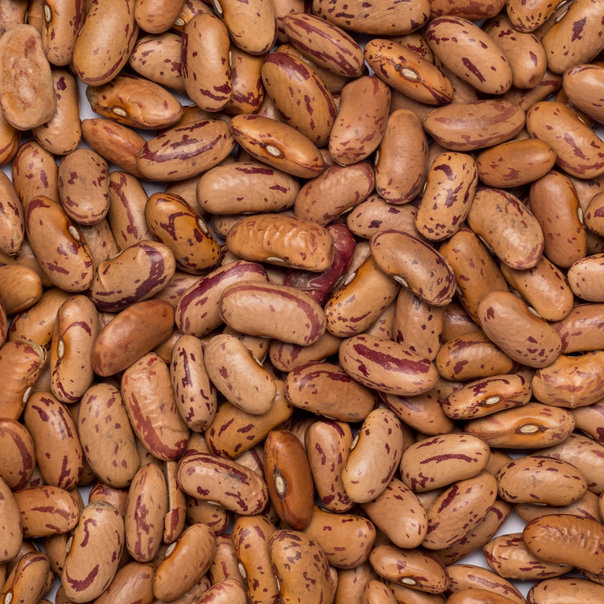 Beans borlotti-pinto org. 5 kg