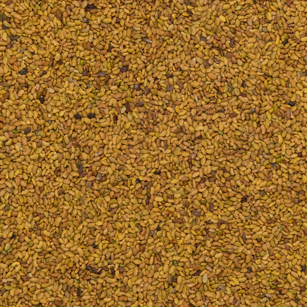 Alfalfa seeds org 25 kg