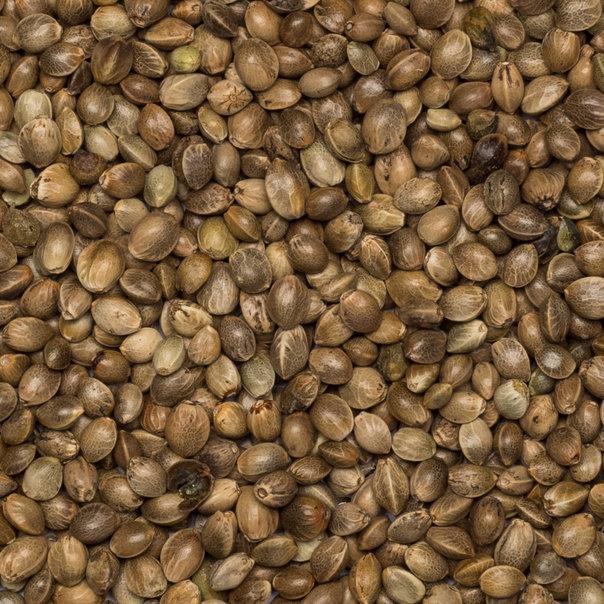 Hempseed unhulled food grade org. 25 kg